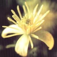 IL FLOWERMASSAGE©